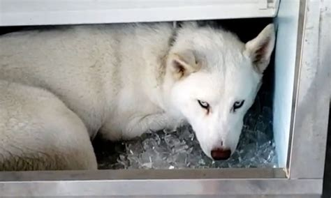 Hot Dog Found in Ice Maker – The Big Show