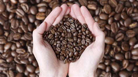 What Is Fair Trade and What Does It Mean? - Definition