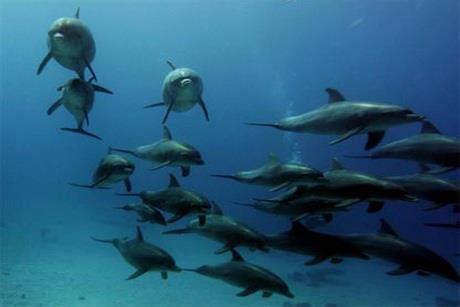 Dolphins Use Diplomacy in Their Communication - Dolphin Way
