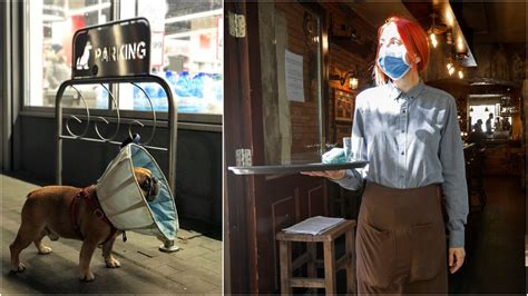 Cones of shame? Maine orders restaurant servers to don