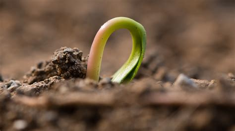 How Pre-Seed Stage Financing is Changing - Small Business